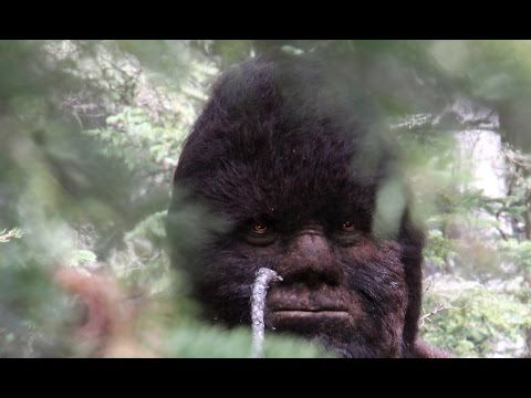 Video #2: Todd Standing Bigfoot video as seen in 2nd Survivorman Bigfoot show with Les Stroud - YouTube