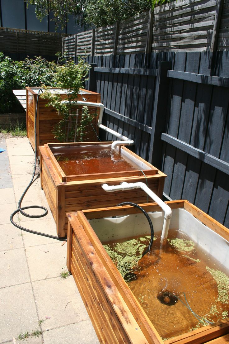Aquaponics project build part 1 hydroponics gardens for Garden pool aquaponics