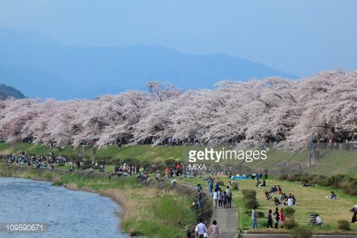 Senboku, Akita, Japan  One of the hanami(cherry blossom viewing spots) destination. I want to go there..