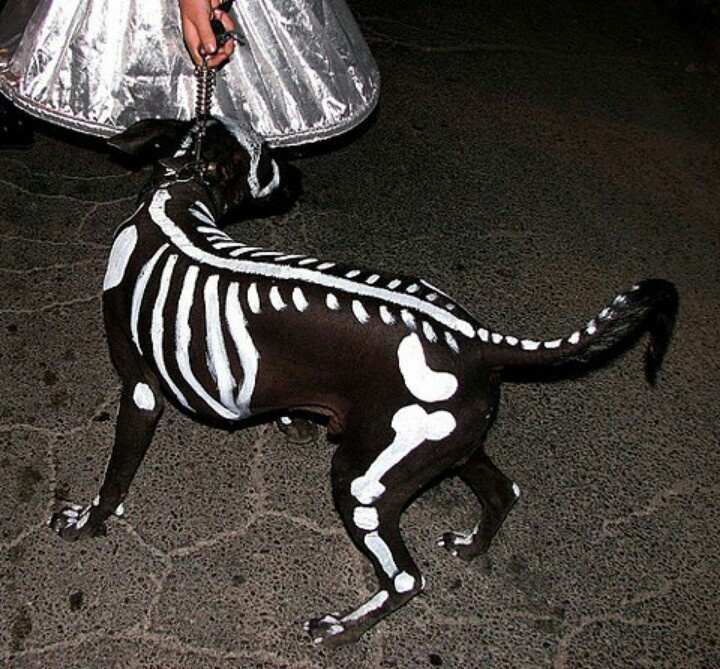 Dog costume...very clever! (With images) Dog halloween