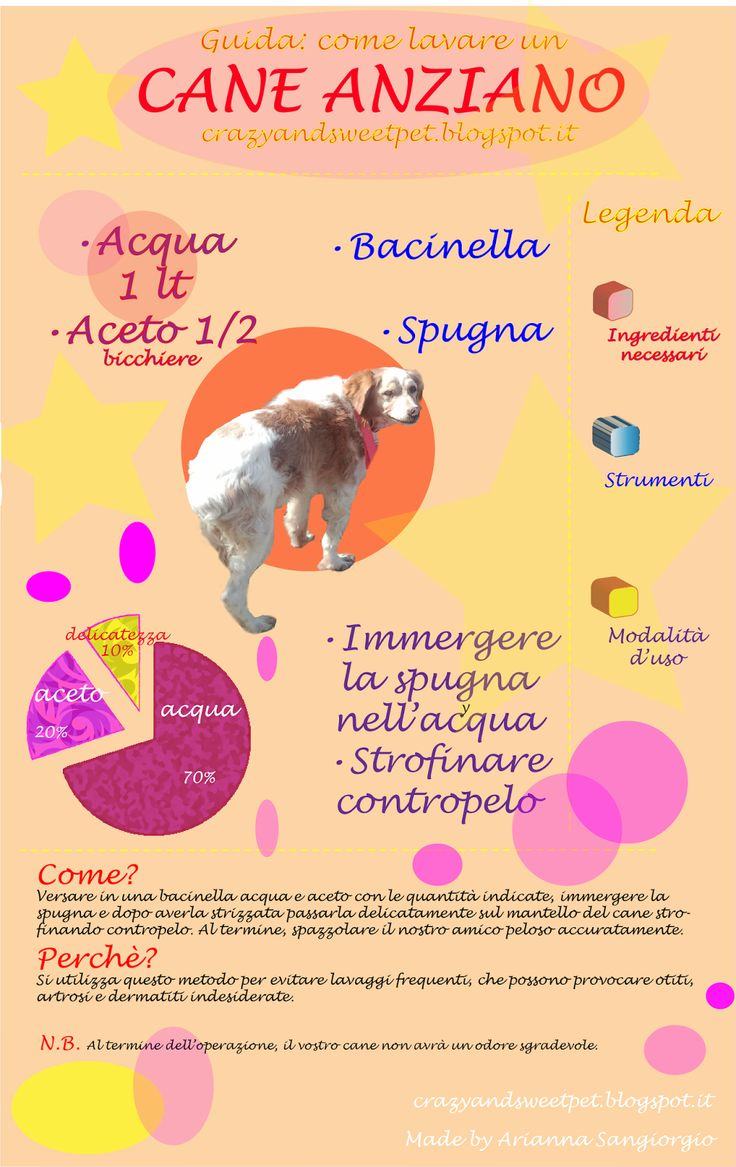 Crazy and Sweet Pets: Come lavare un cane anziano : infografica!