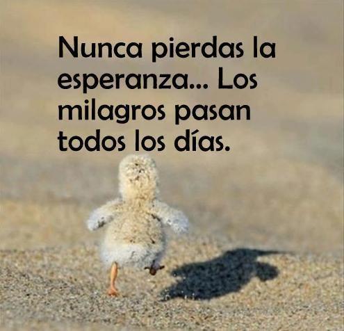 """""""Nunca pierdas la esperanza... Los milagros pasan todos los días."""" #Citas #Frases #Candidman"""
