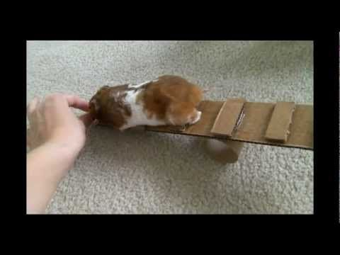 How to Make 3 Homemade Hamster Toys - YouTube