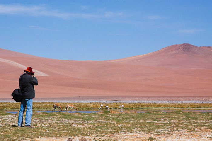 Atacama Desert Explorer © Claudio F. Vidal, Far South Expeditions