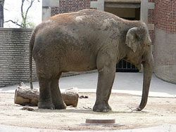 "In Defense of Animals' 2014 list of the Ten Worst Zoos for Elephants - exposing the excessive suffering endured by elephants in North American zoos by spotlighting those guilty of ""an extended & egregious history of disregard for elephant care standards & science."""