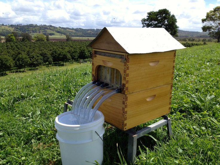 Attrayant The Flow Hive, Set For A Kickstarter Crowdfunding Debut, Introduces A  Simple New Way To Harvest Honey From A Backyard Beehive Without Stressing  The Bees Or ...