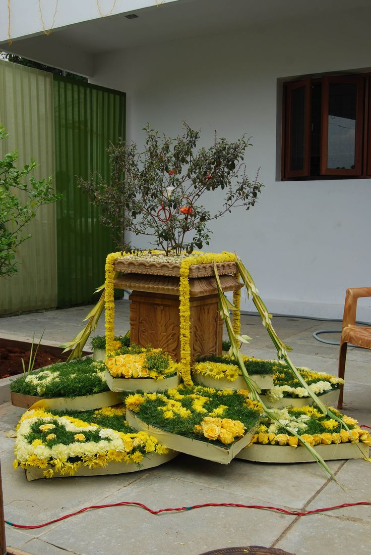 Holy Tulsi decorated for a ceremony.