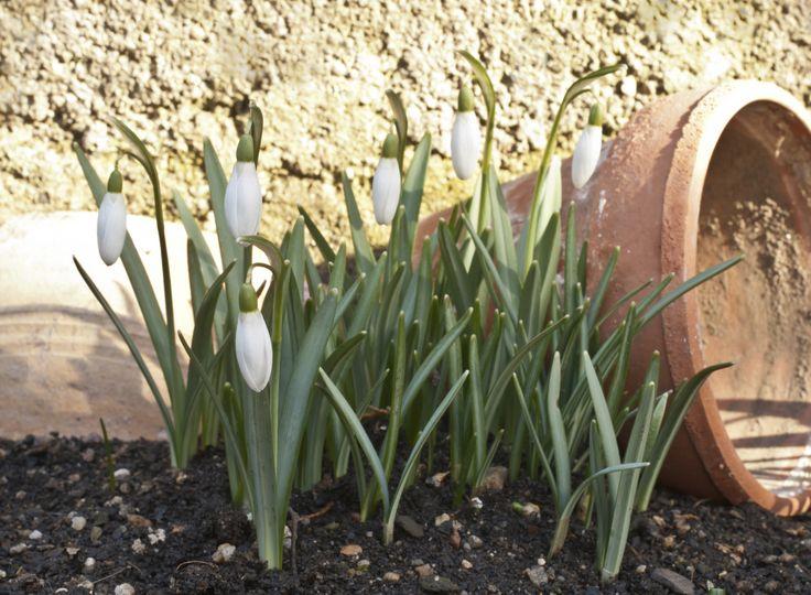 Der Garten Im Februar 698 besten garten terasse bilder auf diy garten garten