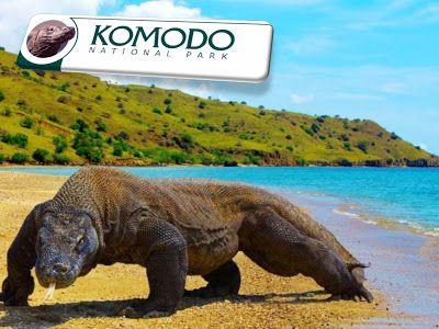 Komodo National Park | Natural Creations