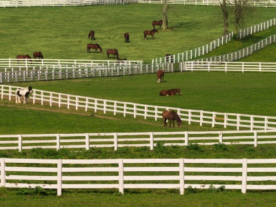 Kentucky Horse Park....One of the most peaceful places on earth!