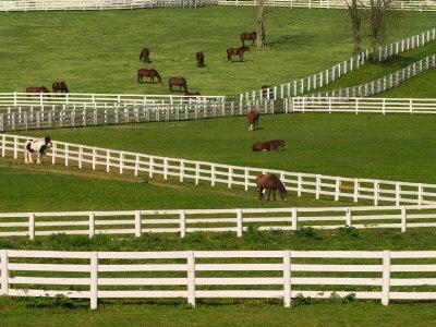 Kentucky horse ranch..