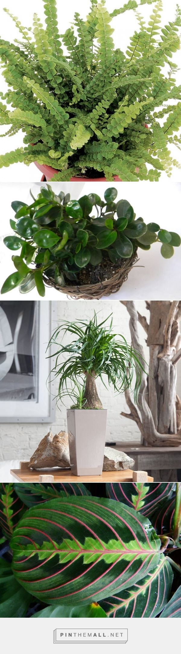 316 best images about indoors plants containers on for Prayer palm plant