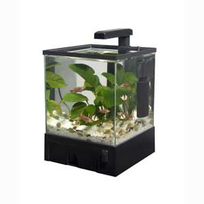 17 best images about betta fighter fish tank ideas on for Fun fish tank