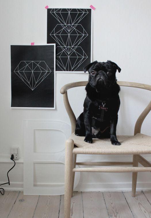 living art. | Image Via: Desire to Inspire: Home Interiors, Black And White, Pet, Black Pugs, Diamonds Design, Art I Like, Wishbone Chairs Posters, Decor Blog, Dogs Milk