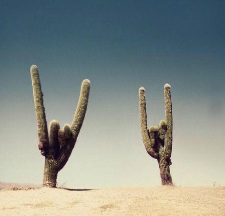 Rock on Cactus!
