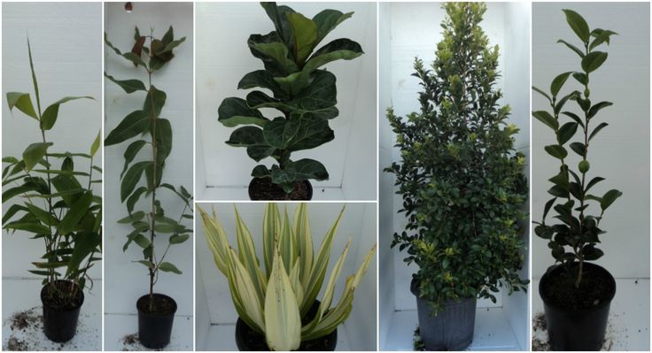 Healthy Green Plants, Garden Ready; Click to Bid here: https://www.lloydsonline.com.au/AuctionLots.aspx?smode=0&aid=6201&pgn=1&pgs=100&gv=True&utm_content=bufferd9a22&utm_medium=social&utm_source=pinterest.com&utm_campaign=buffer Inspections welcome Wednesday from 9am; 159 Reserve Road, Upper Coomera QLD 4209