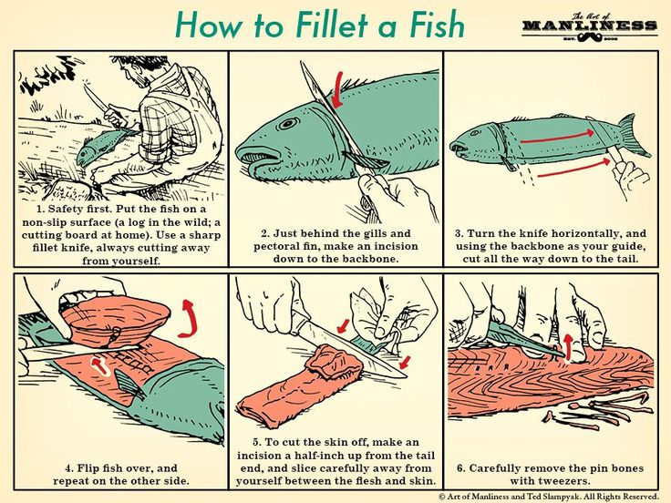 How to Fillet a Fish: An Illustrated Guide