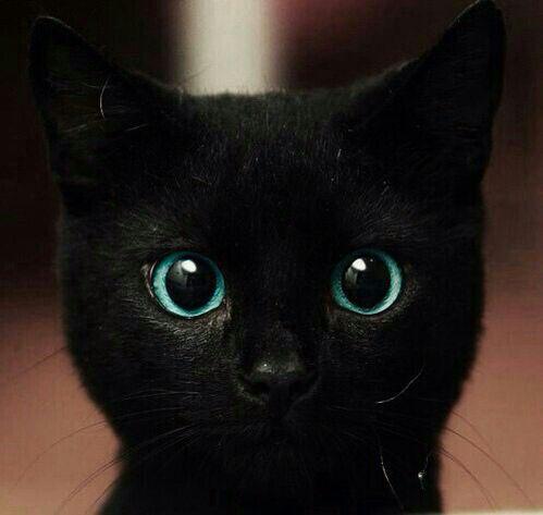Otroligt vackra ögon