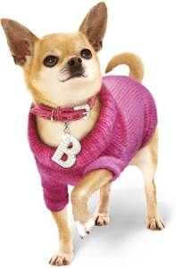 Bruiser Woods of Legally Blonde ~ R.I.P. ~ 18 yrs of sweetness ~.~