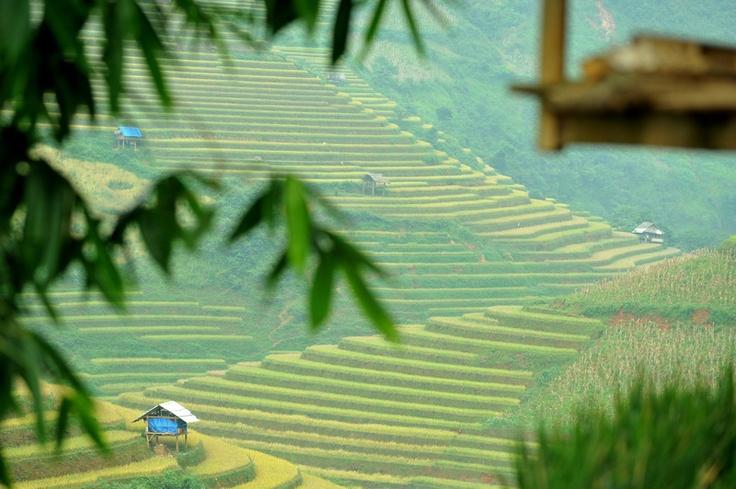 Bamboo, local hut and terraces at Mu Cang Chai.