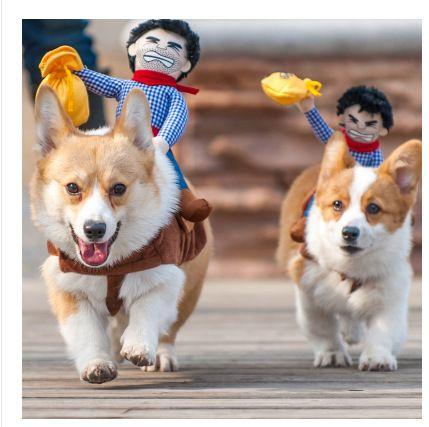 Passeios a Cavalo traje com o chapéu de cowboy cão para cão pequeno grande golden retriever cão de estimação gato engraçado traje Do Partido do Dia Das Bruxas roupas em Casacos e Jaquetas para Cachorros de Home & Garden no AliExpress.com | Alibaba Group