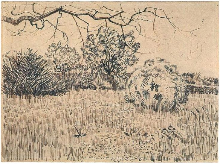 Field of Grass with a Round Clipped Shrub by Vincent Van Gogh  Drawing, Pencil…