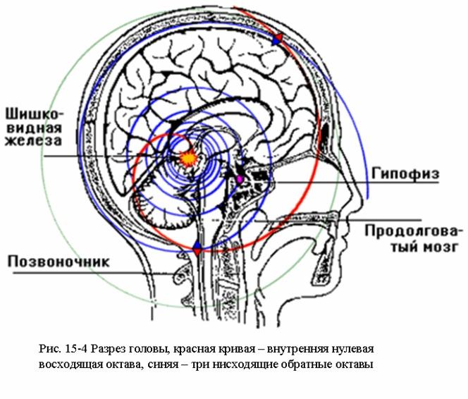 Четыре внутренние октавы головы