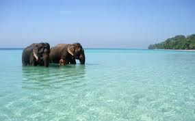Elephants wade in the ocean near the Andaman and Nicobar Islands, Indian Ocean