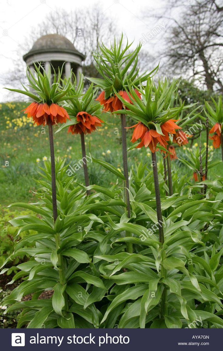 The 7 best cross stitch ideas images on pinterest columbine flower growing in front of kew gardens rotunda izmirmasajfo