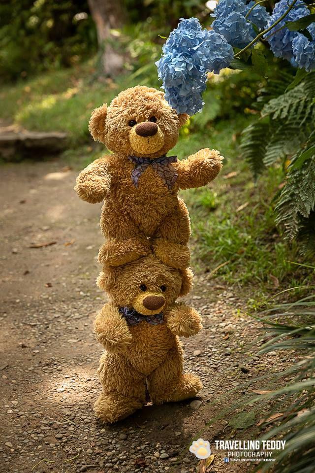 Porque Mejor Son Dos Que Uno Teddy Bear Wallpaper Teddy Bear Pictures Teddy Bear Images