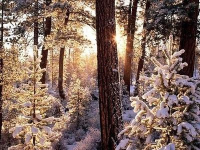 Winter: Forests, Nature, Tree, Winter Wonderland, Snow, Wallpaper, Beauty, Photo, Fairytale