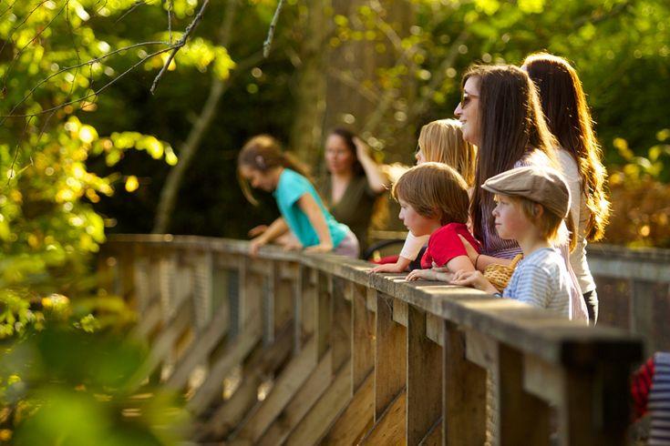 Taitua Arboretum - Visit Hamilton