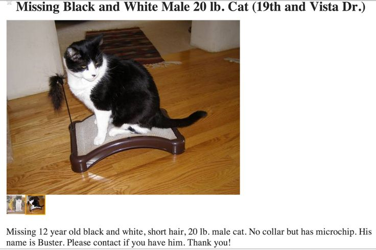 Missing Black and White Male Cat COPets Boulder CO http