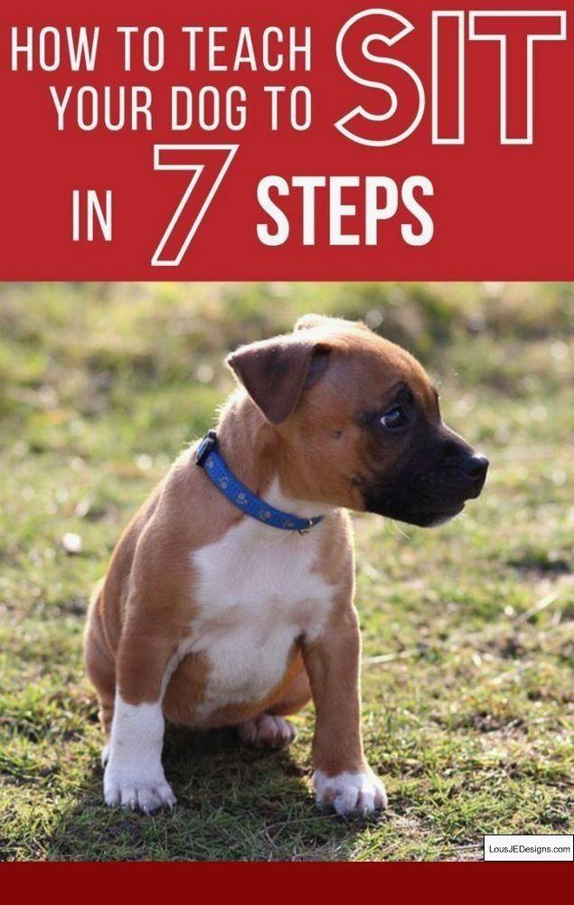Training A Dog To Run Alongside A Bike And Pics Of How To Train