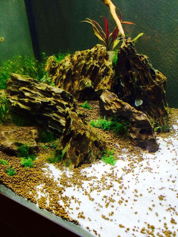 200l juwel lido with dragon stone fish freshwater and for Aquarium 200l