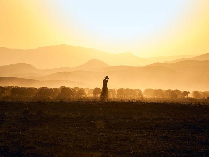 A Shepherd's Flock  Photograph by Juan Aguilar