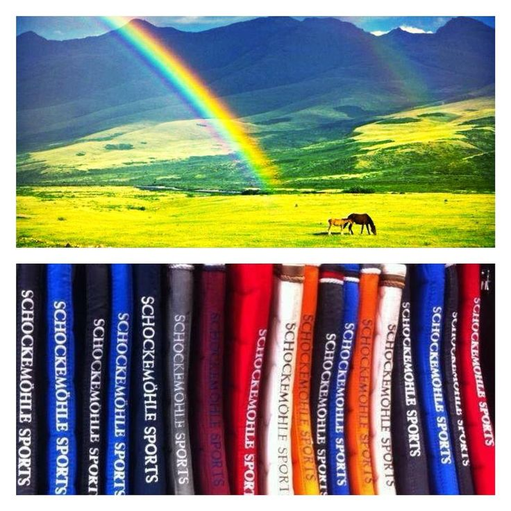 Discover the variety of colors from Schockemoehle Sports at mannEQUIn! #rainbow #colors #schockemöhle #schockemoehlesports #fresh #equestrian #equestrianlife #equestrianstyle #rideinstyle #horseriding #mannequin #trencin #slovakia