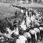 WWI: Horses in war. As mechanized means of destruction, including the tank and long range cannon, the role of horses in the war lessened. Nevertheless, their role was important.