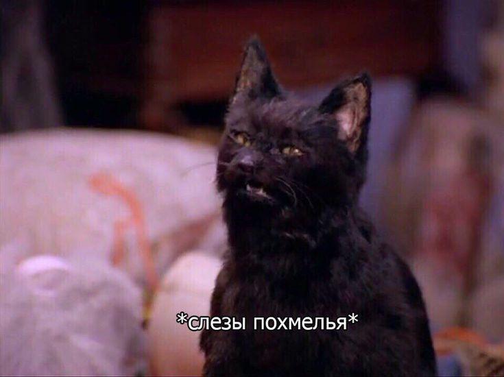 Кот салем смешные картинки