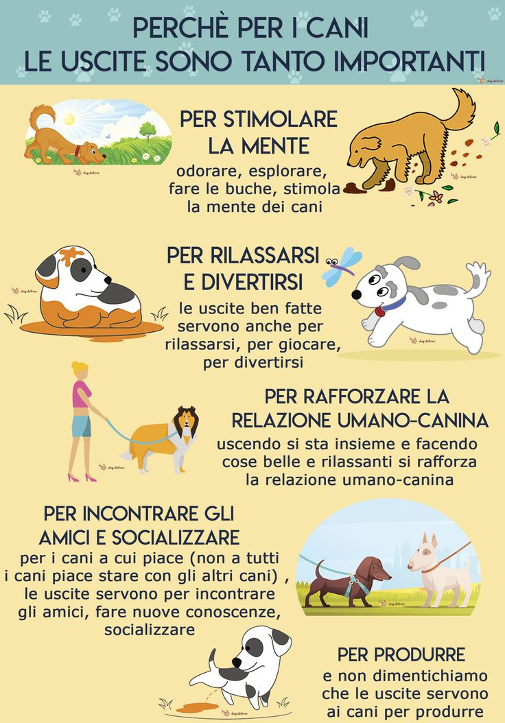 Perchè le uscite sono tanto importanti per i cani   DogDeliver