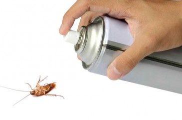 Средство от тараканов - самое эффективное и действенное. Как вывести тараканов народными средствами и отравой