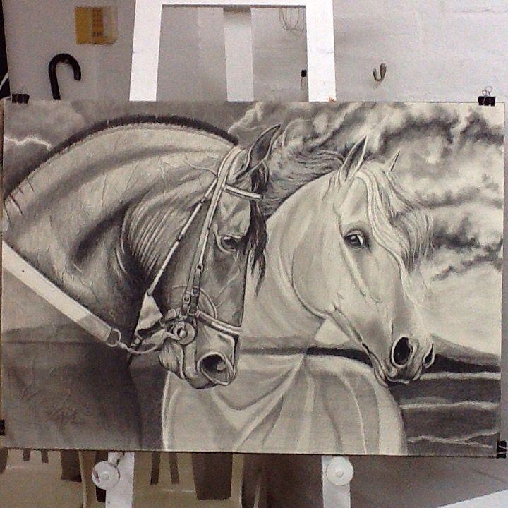 Horse caballos
