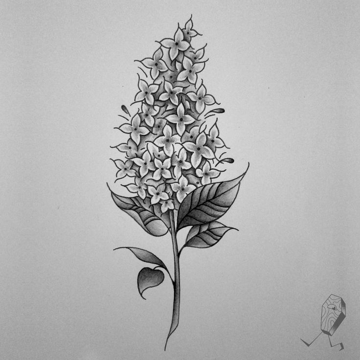 Lilac study for tomorrow. Really enjoying floral designs lately. It ain't all skulls and spiders, you know.