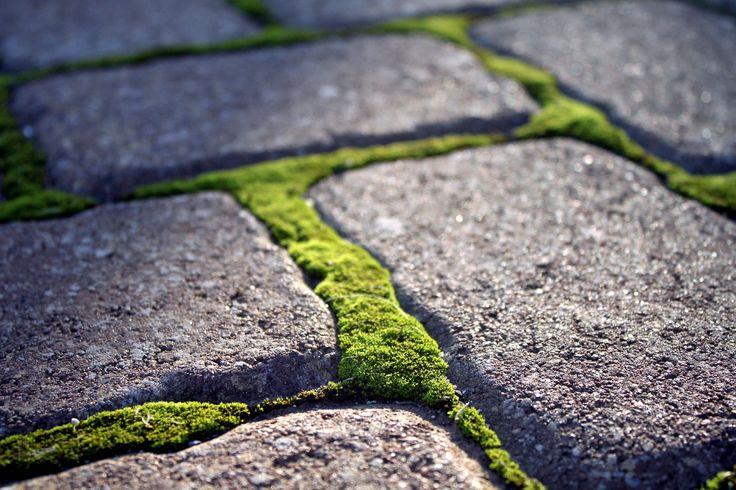 Paving blocks with moss,Stellenbosch July 2014