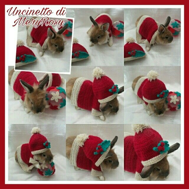 Vestitino natalizio per coniglio nano lavoro all'uncinetto Christmas dress for dwarf rabbit crochet work #vestitino #vestito #coniglio #conigliettonano #coniglietto #rabbits #rabbit #coniglionano #uncinetto #crocheted #crochet #handmade #fattoamano #diy #natale #natalizio #christmas #dress