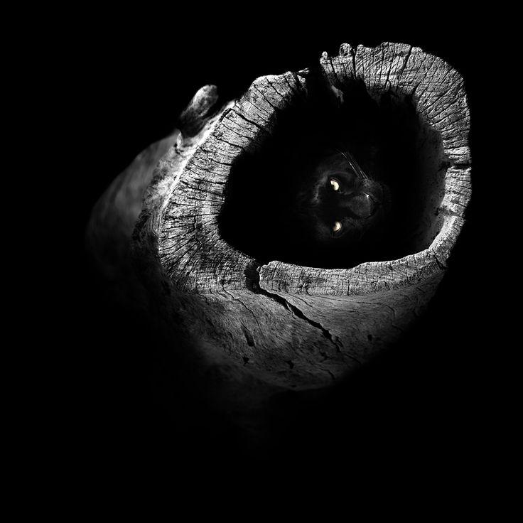 """""""OCULTO"""", por Juan Luis Durán. Una corteza de tronco vacío le sirve a este leopardo (las panteras negras son un tipo de leopardo) para refugiarse en su casa-escondite. Solo sus ojos le delatan. Fotografía tomada en 2013."""