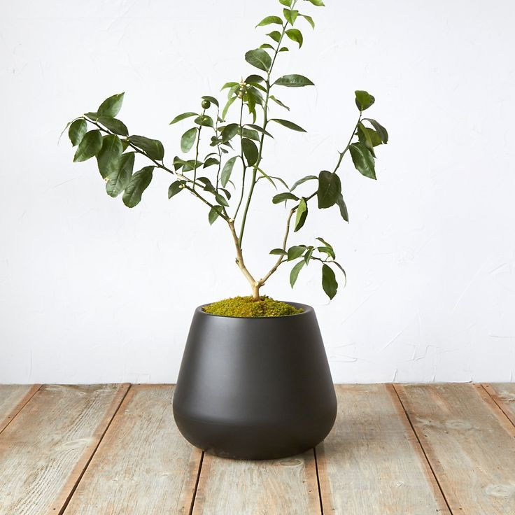Pure Droplet Low Planter, 12