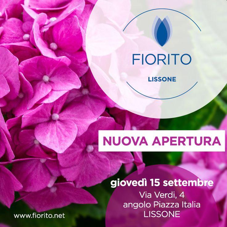 Quanti siamo in #Lombardia? Con #Lissone siamo a quota 7!! #Lombardia #fiori #Brianza