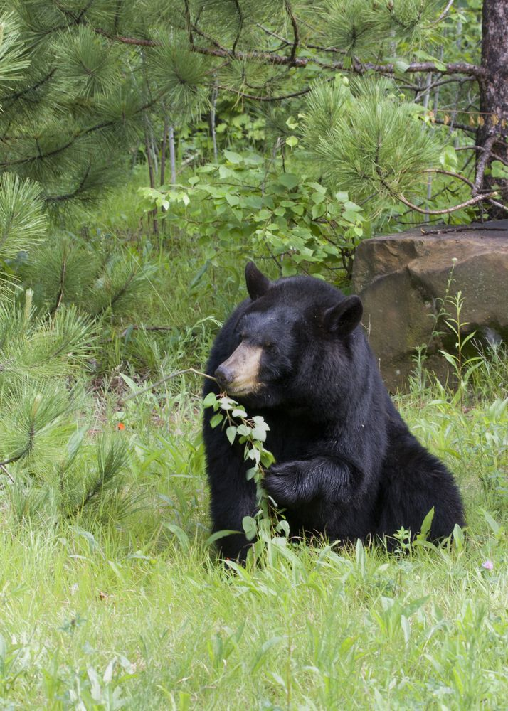 1000 Images About Animals In The Smoky Mountains On