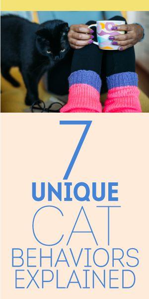 7 Unique Cat Behaviors Explained